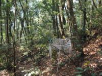 One of 27 forest allotments in the province of Zhejiang in subtropical southeastern China.