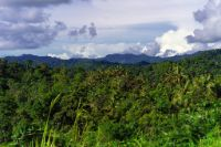 View of mature forest and mountains taken from the Lae-Madang Highway at Morobe Province, Papua New Guinea. (Image: Zacky Ezedin)