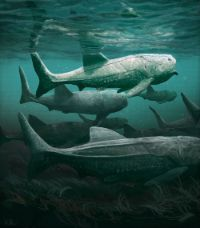 "Artist impression of ""Titanichthys""."