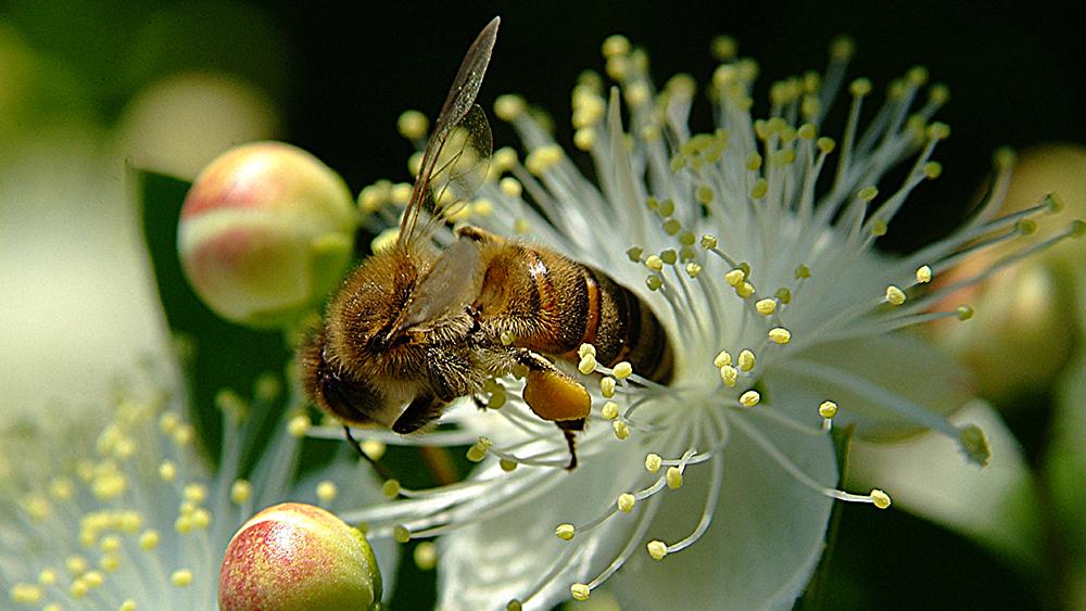 Pflanzen brauchen Insekten, um ihre Pollen zu verbreiten, und dienen ihnen zugleich als Nahrungsquelle. (Bild: istock.com/KenanOlgun)
