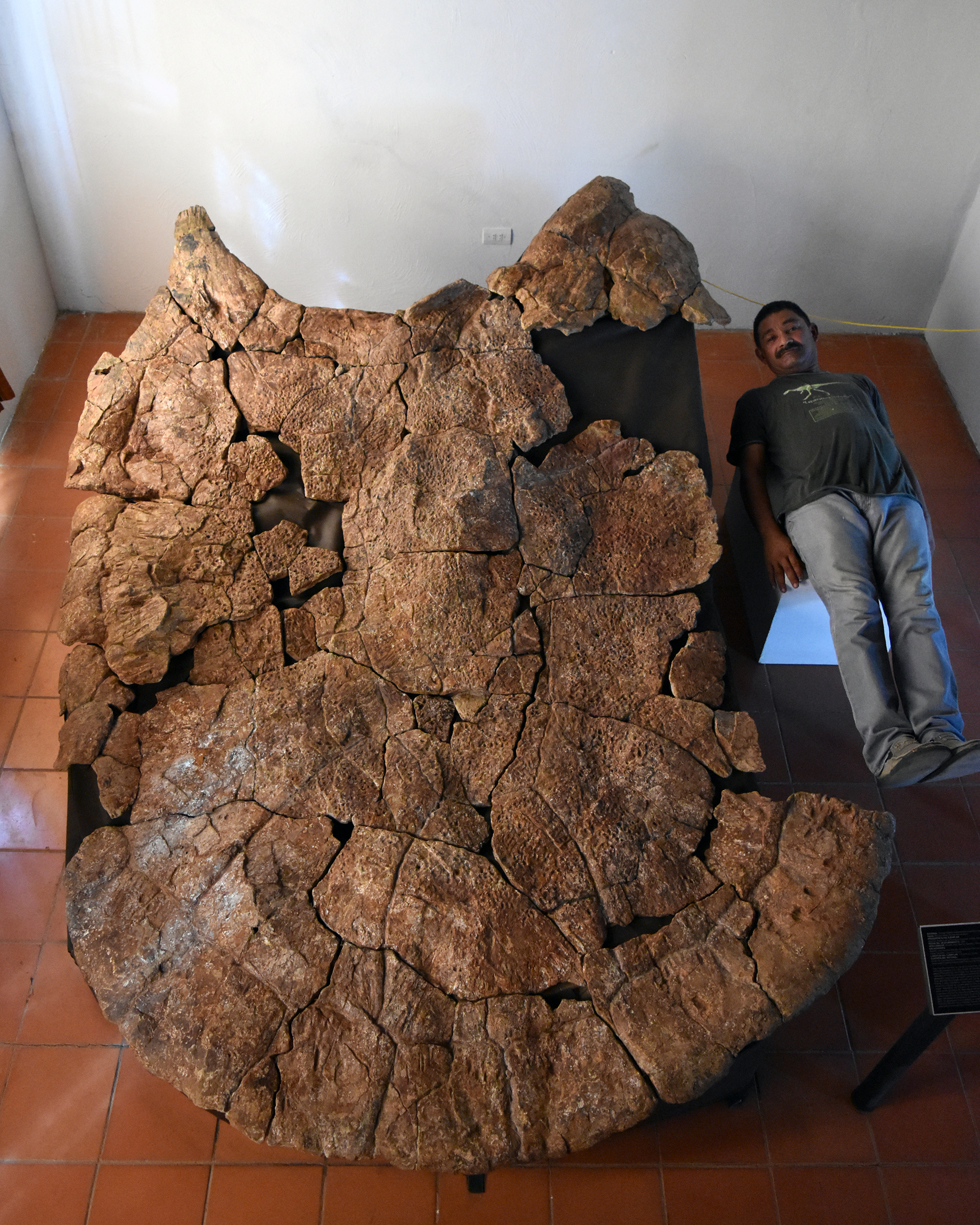 person lies next to enormous fossil turtle shell