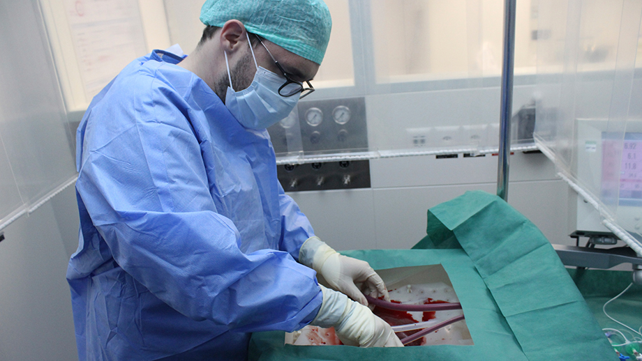 A surgeon connects the donor liver to the perfusion machine. (USZ)