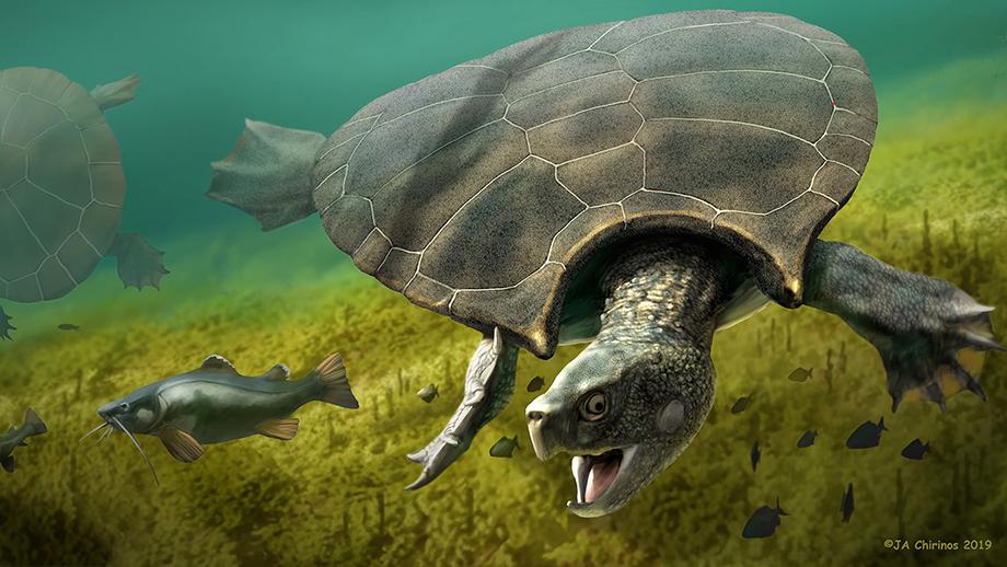 Grafische Rekonstruktion der Riesenschildkröte Stupendemys geographicus, die vor 8 Mio. Jahren in Venezuela lebte. (Illustration: Jaime Chirinos)