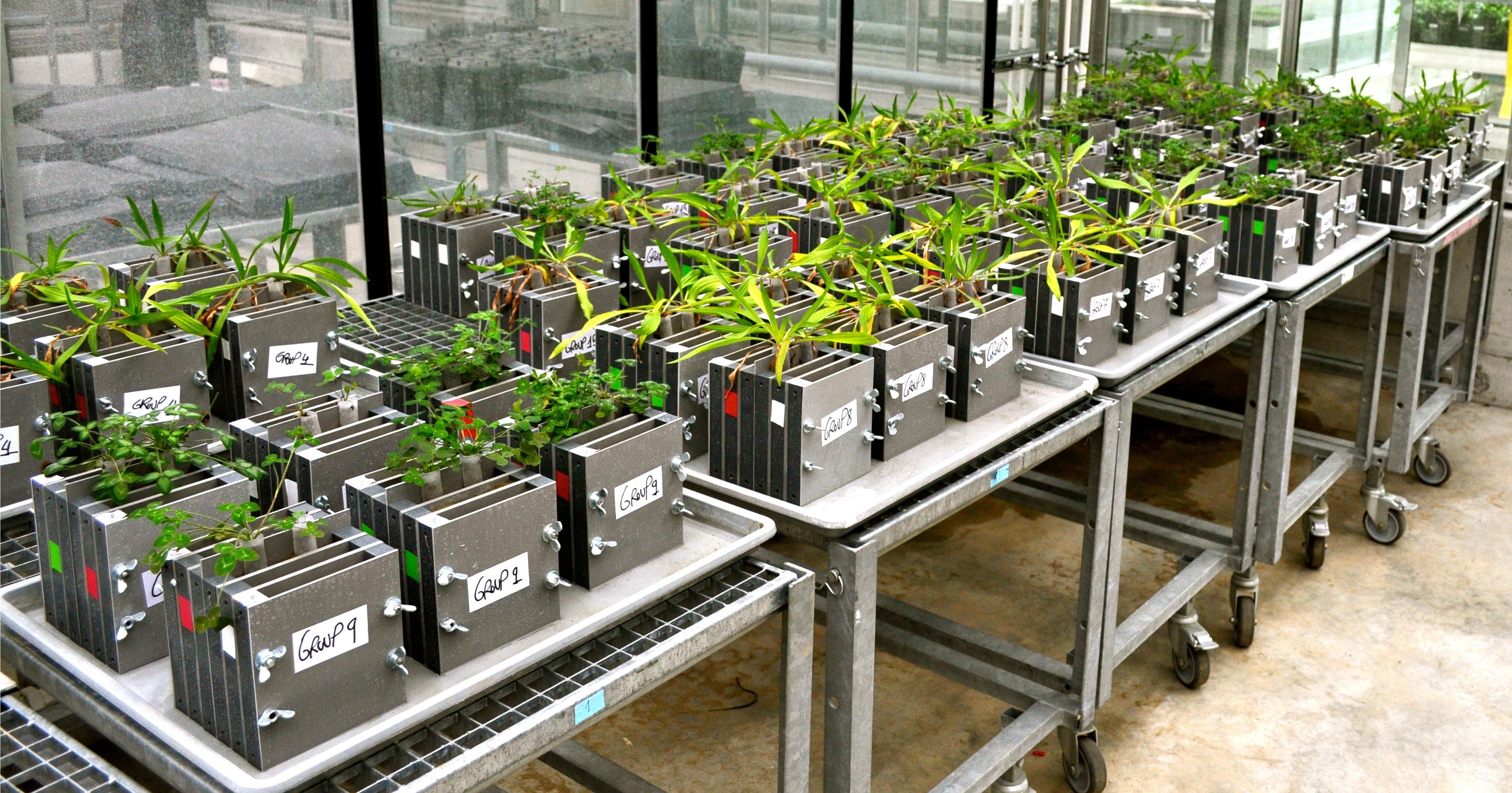 uzh - media - pflanzen zwingen pilzpartner zu fairem verhalten, Terrassen ideen