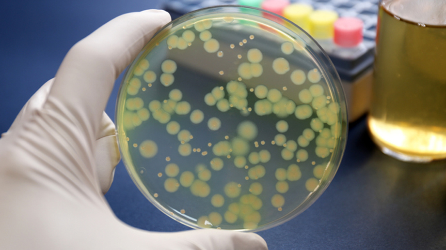 Antibiotic-resistant bacteria are spreading rapidly worldwide – new antibiotics are urgently needed. (Image: istock.com/Ca-ssis)