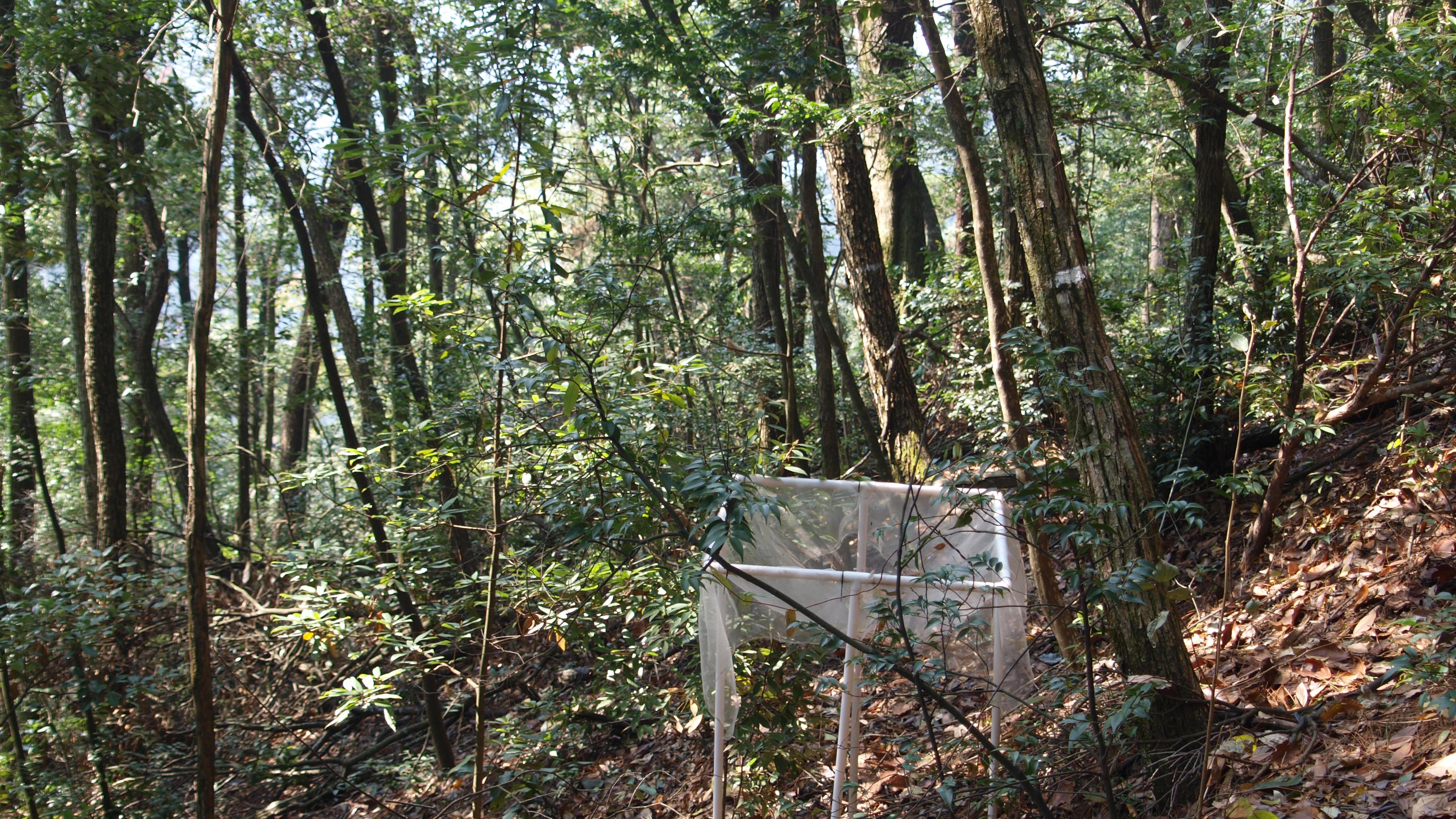 Außergewöhnlich UZH - Media - Artenreiche Wälder kompensieren die Klimabelastungen &QE_05